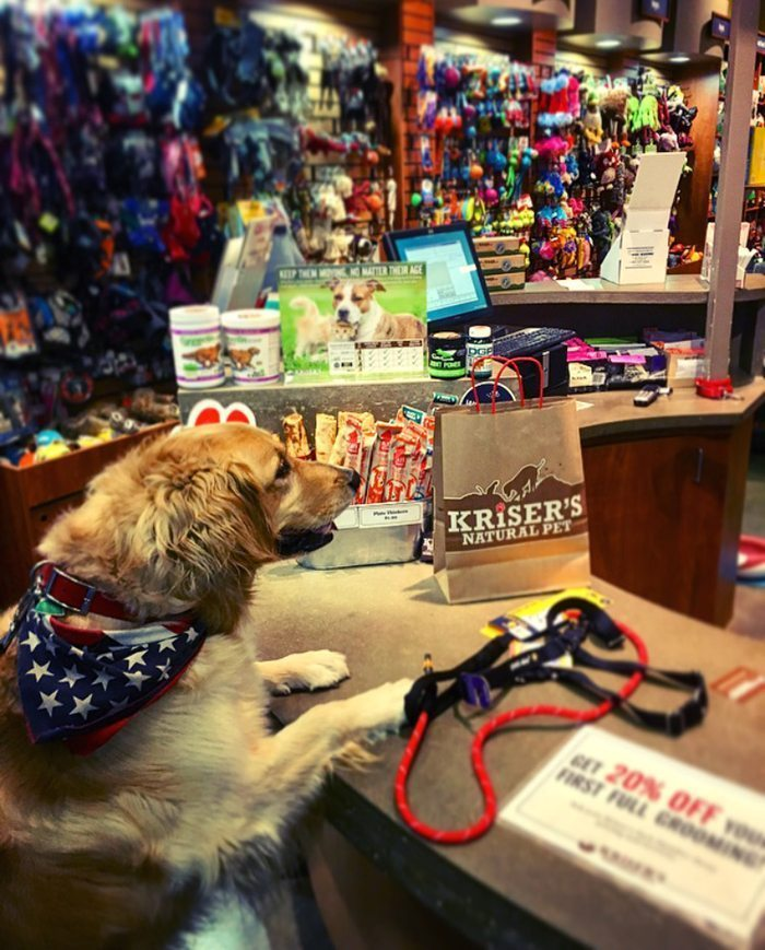 Kriser's Pet Store - The Natural Choice - Blue Mountain Belle